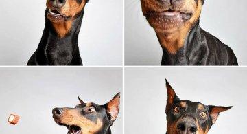 14 Caini simpatici in fotografii salvatoare