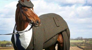 Un cal la patru ace