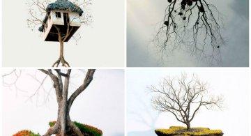 Metafora vizuala a dezradacinarii