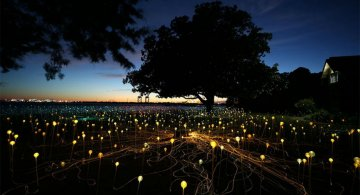 Campul luminii: O experienta luminoasa energizanta