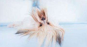 Pictorialul sucit cu cei mai simpatici caini