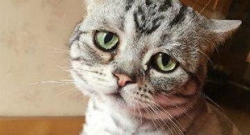Poze haioase cu pisici expresive
