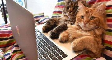 Poze haioase cu pisici neastamparate