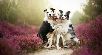 Prieteni de nedespartit, in poze duioase