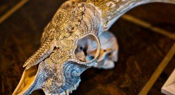 Mandala pe cranii de animale
