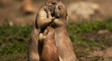 Lumea animalelor, in poze de familie