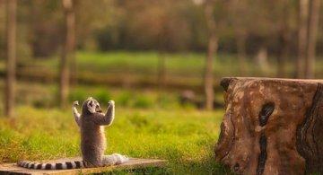 Cele mai haioase poze cu animale