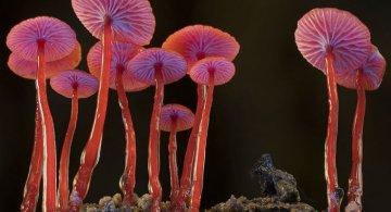 Cele mai ciudate ciuperci din lume