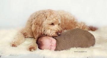 Animale si copilasi, intr-un pictorial superb