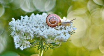 Florile ochilor mei: Picturi din sanul naturii