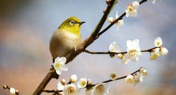 Natura si poezie, in poze superbe