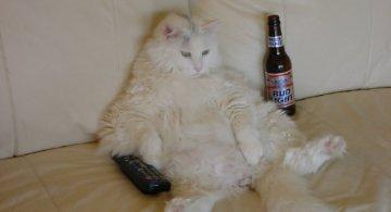 Cele mai simpatice pisici in ipostaze trasnite