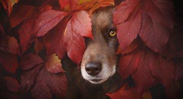 Portrete autumnale de suflet, de Anne Geier
