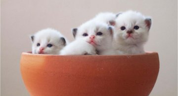 Cele mai frumoase poze cu pisici