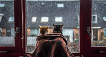 Pisicile care adora ploaia