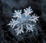 Splendoarea fulgilor de zapada, in poze macro