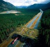 Poduri speciale pentru vietuitoarele salbatice