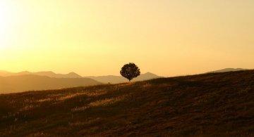 C. Jung: 10+ Cugetari care te ajuta sa te redescoperi