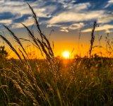 Trucuri utile: Cum trecem mai usor peste o zi torida de vara