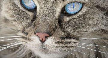 Studiile au demonstrat: Pisicile au puteri terapeutice