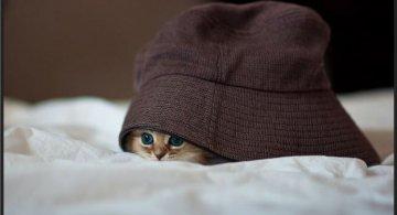 Cele mai dragute pisici din lume, in poze adorabile