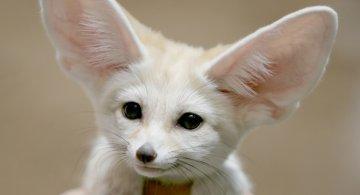 Cele mai dragute animale din lume, intr-un pictorial adorabil