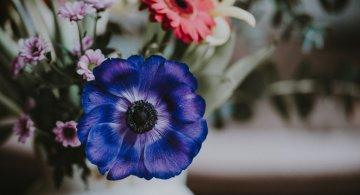 Cele mai frumoase flori din lume, intr-un pictorial de exceptie