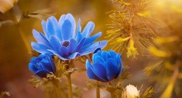 Gingasia florilor de primavara in poze superbe