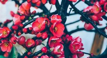 Splendoarea copacilor infloriti in poze superbe