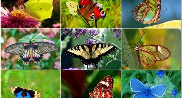 Cei mai frumosi fluturi din lume, in poze spectaculoase