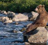 Ursul brun din Kamchatka, intr-un pictorial de exceptie