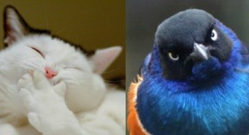 Cele mai expresive animale, in imagini haioase