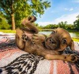 Concurs foto Kennel Club 2018: Cel mai bun prieten al omului, in poze spectaculoase