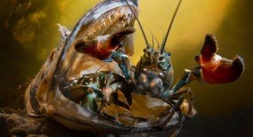 Concurs foto UPY 2018: Fotografii superbe din uimitoarea lume subacvatica