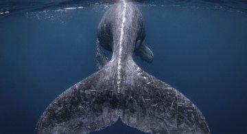 National Geographic: Cele mai frumoase fotografii de calatorie