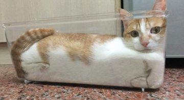 20+ Pisici contorsioniste, in poze haiose