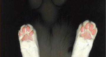 Dovezi ca pisicile sunt adorabile din orice unghi le-am privi