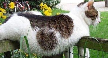 Pisicile chiar au simtul umorului. Avem dovada!