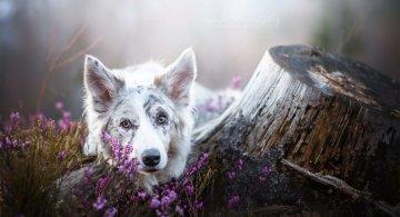 Bucuria sufletului frumos de caine, in poze superbe