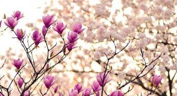 Superbele flori de primavara, in poze de o frumusete rara