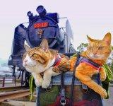 Jurnalul de calatorie al pisicilor plimbarete, in poze adorabile