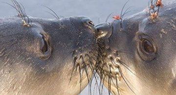 Cele mai simpatice animalute de la Polul Nord, in poze adorabile