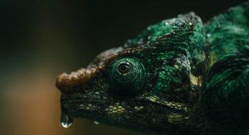Frumusetea salbaticiei din Madagascar, in poze uluitoare