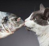 Cele mai frumoase pisici, intr-un pictorial atipic