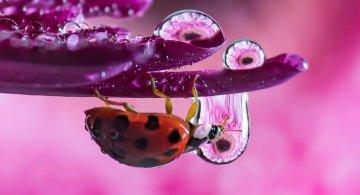 Cum se oglindeste frumusetea naturii in picaturi limpezi de apa