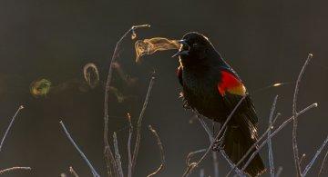 Concurs Foto Audubon 2019: Splendoarea pasarilor, in cele mai frumoase fotografii
