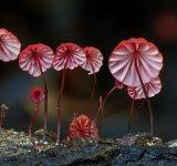 10+ Ciuperci fantastice, in poze ireal de frumoase