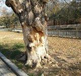 Parcul Nicolae Romanescu: Minunea verde din Banie, in poze spectaculoase