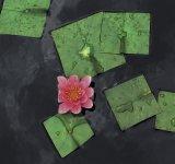 Flori patrate: Cand geometria naturii devine relativa