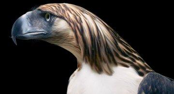 Frumusetea pasarilor rare, in poze fascinante